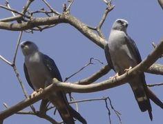 Imágenes de aves y pájaros Con Movimiento para compartir en Facebook