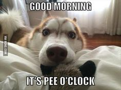 Every. Single. Morning. Good morning its pee o'clock. Puppy waking up their human. So cute!   www.facebook.com/rescuepawspage