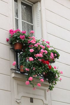 Paris apartment window with geraniums in flower boxes