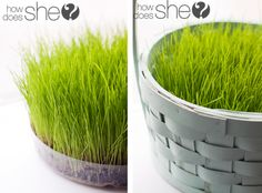 grow your own Easter basket grass.  way better than using plastic.