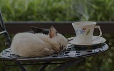 World's Coolest Animal Cafes: How Many Have You Been To? | MakeMyTrip Blog