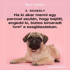 Mopsz szabályok - a békés együttélésért vagyis a mopsz kényelméért Pitbull, Buldog, Dogs, France, Pit Bull, Pet Dogs, Doggies, Pit Bulls, Pitbulls