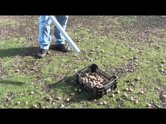 Sběrač ořechů - YouTube Garden Tools, Make It Yourself, Youtube, Yard Tools, Youtubers, Youtube Movies