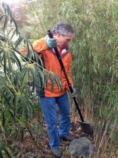 Tips To Keep Bamboo From Spreading The Seattle Times Plants Gardening