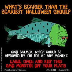GMO Salmon Could Be Approved By The FDA At Any Moment. Label GMOs And Keep This GMO Monster Off Your Plate! GMO Salmon Expert Eric Hoffman, Friends of the Earth provides truth behind GMO salmon: http://www.smarthealthtalk.com/seafood-education.  Also hear Eric here: http://www.smarthealthtalk.com/tyson-flick-chef-rene-eric-hoffman-katrina-frey-starkie-sowers.html