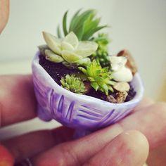 Mini jardin / Little garden