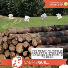 #SabíasQue Para producir 300 resmas de hojas es necesario derribar entre 12 a 15 árboles.