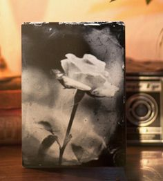White Rose Aluminum Tintype Art | Captured on antique equipment and developed using the wet plat... | Photographs