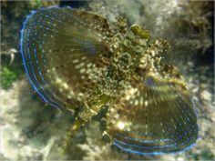 10 Peixes curiosos do mar de Porto de Galinhas
