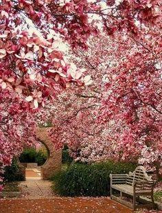 LOVE LOVE, gorgeous Spring garden, pink tree blossoms, teak bench, modern traditional garden