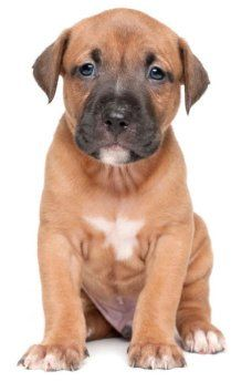 strong male dog names for pitbulls