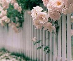 172 imágenes sobre Spring en We Heart It | Ver más sobre flowers, spring y nature Climbing Roses, Image Sharing, Spring, Find Image, We Heart It, Plants, Planters, Plant, Planting