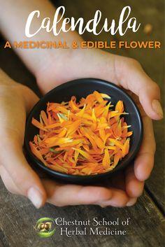 Calendula: A Medicinal & Edible Flower  #calendula #calendulaofficinalis #herbalife #herbal #herbs #herbalism #herbalist #edibleflower #herbgardening