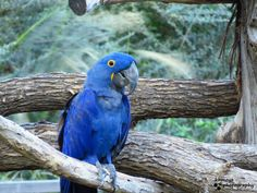 This bird was a camera ham :) Fort Worth Zoo, Ham, Parrot, Bird, Animals, Parrot Bird, Animales, Animaux, Hams