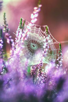 How welcoming in a different point of view. Beautiful Even though I absolutely abhor spiders, I love the look of spider webs.