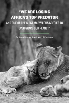 I just pledged to do my part to save Africa's lions. Will you help to #LetLionsLive? Visit letlionslive.org to learn more and sign the pledge!