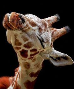A giraffe can always make me smile.