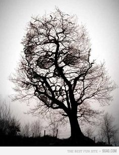 Check out the skull in the tree