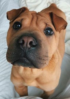 @dallasthewalpig Cute Dogs And Puppies, I Love Dogs, Doggies, Animals And Pets, Funny Animals, Puppy Care, Cute Little Animals, Cute Creatures, Animals Beautiful