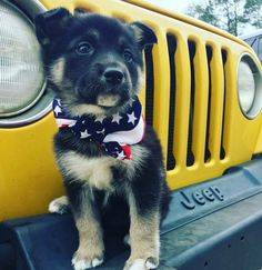 Excellent Beautiful dogs detail are readily available on our internet site. Take a look and you wont be sorry you did. Super Cute Animals, Cute Funny Animals, Cute Baby Animals, Funny Dogs, Animals And Pets, Cute Cats, Cute Animal Pictures, Dog Pictures, Beautiful Dogs