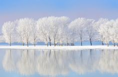 Photographic Print: Winter Trees Covered with Frost by laurentiu iordache :