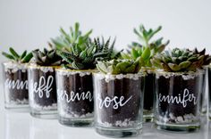 Pine flora co. started in 2017 after owner joanne lam came up with the idea to gift succulents as favours to her guests for her own wedding. Coffee Wedding Favors, Summer Wedding Favors, Wedding Favours Luxury, Honey Wedding Favors, Succulent Wedding Favors, Creative Wedding Favors, Inexpensive Wedding Favors, Edible Wedding Favors, Cheap Favors