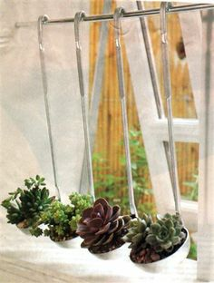 Kitchen window:  succulents in ladles.  Very clever!..SMART