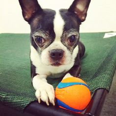 Take the ball, I double dog dare you.