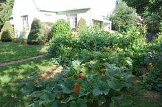 front yard garden - Google Search