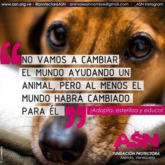 """""""No vamos a cambiar el mundo ayudando a un animal pero, al menos, el mundo habrá cambiado para él ¡Buenos días!"""""""