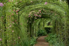"""This makes me think of the book, """"The Secret Garden."""""""
