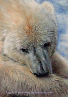 Polar Bear ~ Pastel drawing by Angela Franke Polar Bear Drawing, Animals And Pets, Cute Animals, Animal Painter, Bear Paintings, Bear Pictures, Bear Art, Watercolor Animals, Wildlife Art