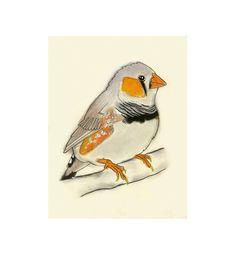Zebra Finch Bird Art -  Peter -  4 X 6 print