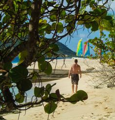 Swimming with Turtles in the Tobago Cays. Is there anything better than diving into idyllic Caribbean waters surrounded by beautiful uninhabited islands? Grenadines, Turtles, Surfboard, Diving, Caribbean, Palm, Swimming, Island, Water