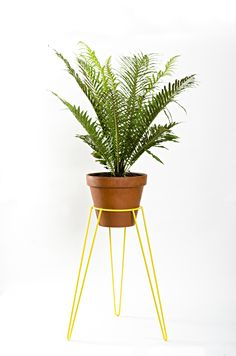 Mid century inspired yellow plant stand with fern wirelyhome.com