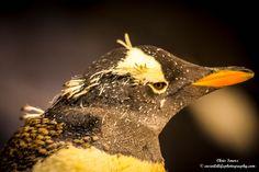 Penguin from new Antarctica exhibit.