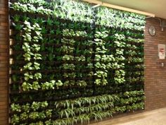 "Lord Beaverbrook High School Living Wall- @Dirtt ""Breathe"" wall installed by the students. We supplied the plants. Pretty cool!"