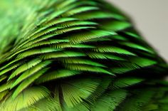 Electric green.
