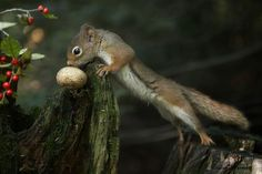 The bridge by Andre Villeneuve on 500px. Squirrel and mushroom
