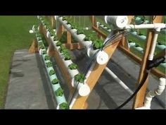 DIY Vertical A-Frame Hydroponic System, How To Grow 168 Plants In A 6 X 10 Area   Handy & Homemade