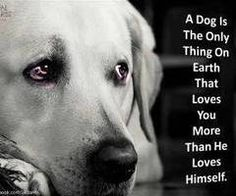 Dog Life.  The bond between a dog & a loving owner is unbreakable. I love my dogs.