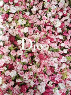 8e7ff59e4e0a Dior Roses Everything Pink, Dior Flowers, Dior Flower Wall, Flower Wall  Wedding,