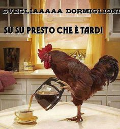 Italian Phrases, Good Morning Good Night, Morning Pictures, Rooster, Funny Pictures, Humor, Animals, Genere, Cleopatra