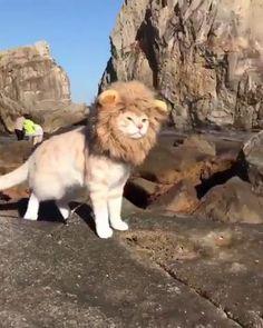 なんて凛々しいにゃん・・・ライオンなんだ