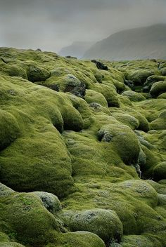 Lava and Moss Fields - Iceland