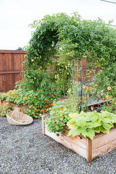 Garden Arch Trellis, Potager Garden, Veg Garden, Garden Landscaping, Home Vegetable Garden Design, Garden Arches, Farm Gardens, Outdoor Gardens, Raised Garden Beds