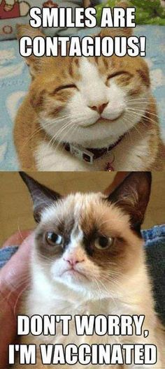 Grumpy cat quotes are funny to read. Tardar Sauce also known as the Grumpy cat is a celebrity and queen of cats. We have collected a list of amazingly funny and Animal Jokes, Funny Animal Memes, Cute Funny Animals, Funny Animal Pictures, Cute Cats, Funniest Animals, Cat Fun, Sports Pictures, Animal Pics