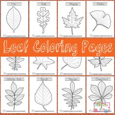 It's never too early to start learning about trees that surround us and learning about leaves is a big part of it! Itsy Bitsy Fun shares her free printable leaf coloring pages that are sure to help with tree identification. Autumn Crafts, Autumn Art, Autumn Theme, Leaf Coloring Page, Coloring Pages For Kids, Coloring Sheets, Leaf Identification, Tree Study, Crafts For Kids