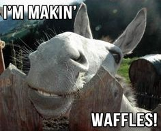 """""""And in the morning, I'm making WAFFLES!"""" - Donkey from Shrek 1"""