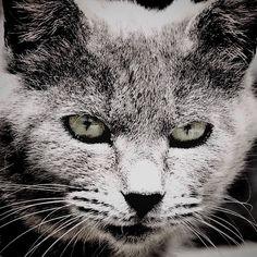 "@shoji_ogawa_unlimited's photo: ""#釜ヶ崎#kamagasaki#cat"""